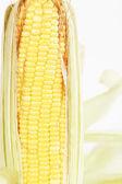 Ucho kukurydzy na białym tle na białym tle — Zdjęcie stockowe