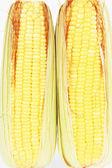トウモロコシの白い背景で隔離の耳 — ストック写真