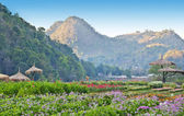 Flowers garden at angkhang nature resort chiang mai — Stock Photo