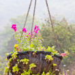 Flowers in the basket — Foto Stock