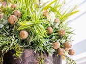 Okrasné rostliny — Stock fotografie