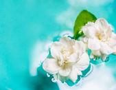 Jasmine flower on the water — Stock Photo