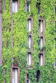 Tree on building. Think green concepts. — Stock Photo
