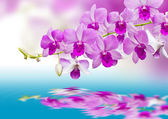 Orchids and reflection — Stock Photo