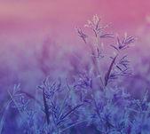 Nature background — Photo