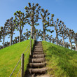Wooden steps upward — Stock Photo