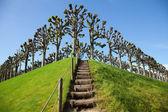 Vers le haut des marches en bois — Photo