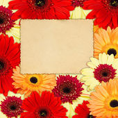 Colour background from grbera flowers with old photo — Stock Photo