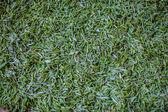 新鮮な緑茶葉完全なフレーム — ストック写真