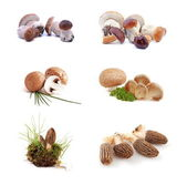 Mushrooms collection — Stock Photo