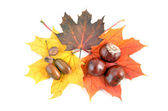 Chestnuts and autumn leaves — Stock Photo