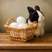 Easter still life with eggs and bunny toy — Stock Photo