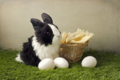 Easter composition with eggs and rabit on grass — Stock Photo