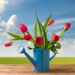 Spring tulip bouquet on wooden table over beautiful blue sky — Stock Photo