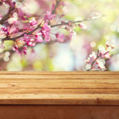 Spring blossom background — Stock Photo