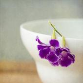 Background with macro purple flower — Stock Photo