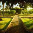 Stock Photo: Straight path in botanical garden