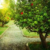 Beautiful green bush in park — Stock Photo