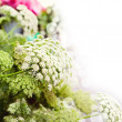 Flower dill  background — Stock Photo
