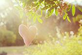 Valentine's day nature background — Stock Photo