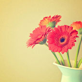 Gerbera daisy flowers — Stock Photo
