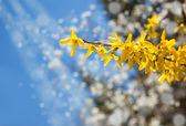 树在春天 — 图库照片