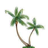 Palm tree isolerade — Stockvektor