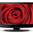 Red rose on monitor screen — Stock Vector