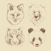Set of different wild animals — Stock Vector