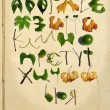 Ukrainian alphabet with green leaves — Stock Photo