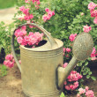 Stock Photo: Beautiful pink rose in garden near watering can