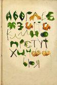 緑の葉とウクライナのアルファベット — ストック写真