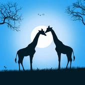Couple of giraffes — Stock Photo