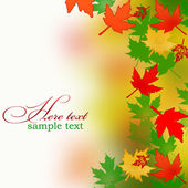 Background from autumn leaves — Stock Photo