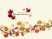 Autumn leaves. — Stock Photo