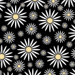 Daisies on a black background - Stock Photo