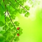 Ladybug sitting on a green leaf — Stock Photo #25500401