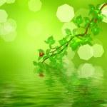 Ladybug sitting on a green leaf — Stock Photo