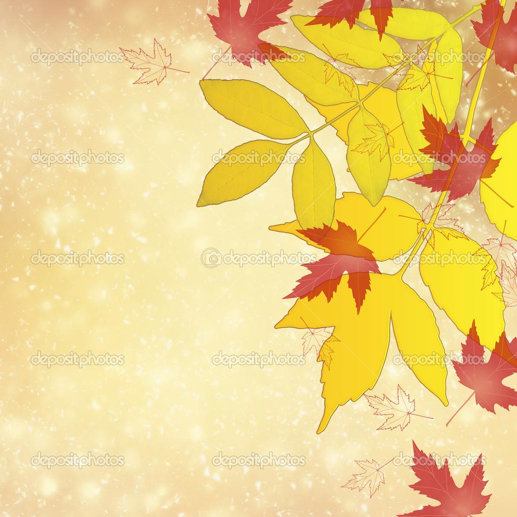 多彩的秋天树叶 — stock photo #26011175