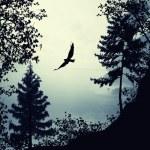 The bird fly away — Stock Photo