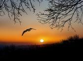 The bird flies over a lake — Stock Photo