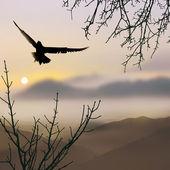 自然の背景に鳥 — ストック写真