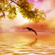 Birds flying over the river — Stock Photo