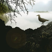 Bird on the background of nature — Stock Photo