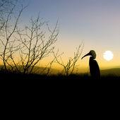 Skuggan av fågeln på natur bakgrund — Stockfoto