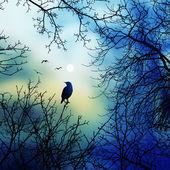 Ağaç üzerinde kuş sit — Stok fotoğraf
