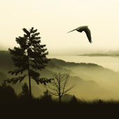 Birds flying on the background of nature — Stock Photo