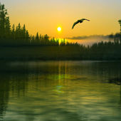 Bird flying over the river — Stock Photo