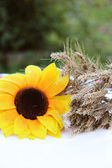 Sunflower and wheat — Stock Photo