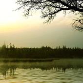Sjön och skogen — Stockfoto